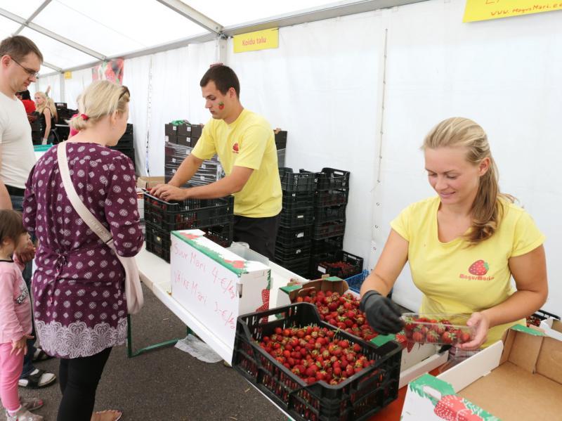 maasikafestival